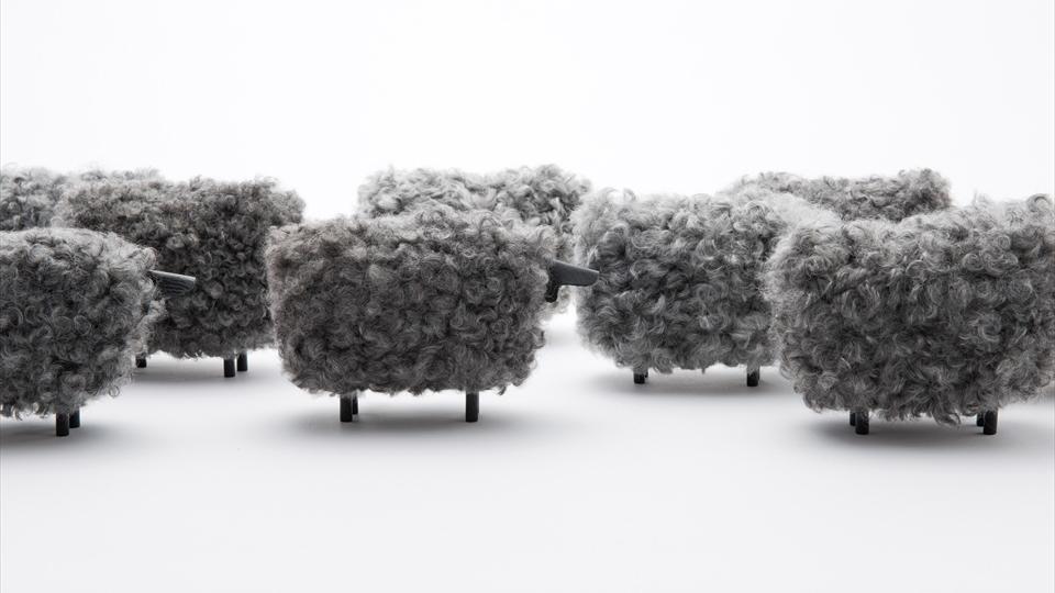 Gotland,sheep,marte,kazuya koike